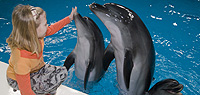 Dubai Dolphinarium